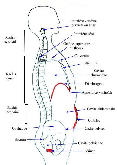 veines apparentés causes